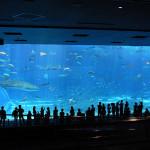 世界最高の水族館/海洋博公園海のゾーン「沖縄美ら海水族館」 (沖縄県)