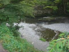 川遊び・水遊び・魚とり-自然の川 埼玉・高麗川(関東埼玉県日高市)