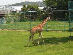 緑の中の動物園。サルの展示が充実-浜松市動物園(東海静岡県浜松)