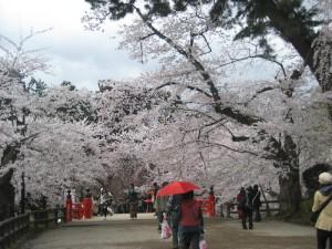 花見のシーズン!GW旅行にお勧めの東北ドライブ/桜の名所 弘前公園(弘前城) (東北青森県弘前市)