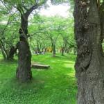 水遊びにアスレチック遊具!緑豊かなピクニック公園 「アルプス公園-TOYBOX」(長野県松本市)