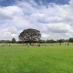 広大な緑の芝生広場「みんなの原っぱ」-国営立川昭和記念公園(関東東京立川)